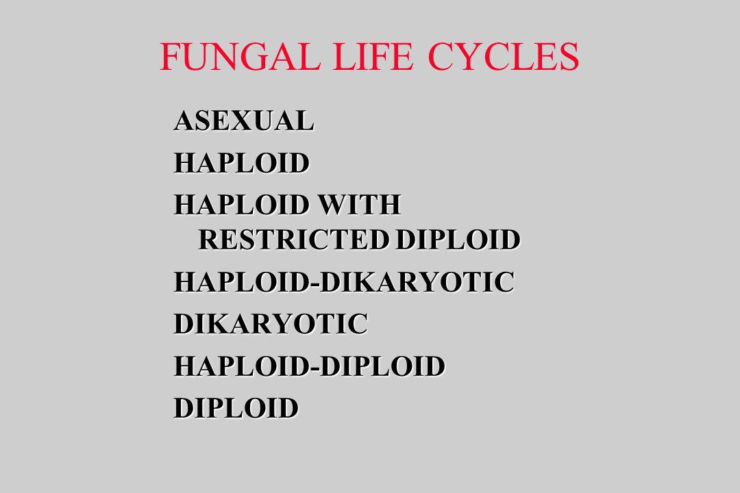 FUNGAL LIFE CYCLES ASEXUALHAPLOID HAPLOID WITH RESTRICTED DIPLOID HAPLOID-DIKARYOTICDIKARYOTICHAPLOID-DIPLOIDDIPLOID