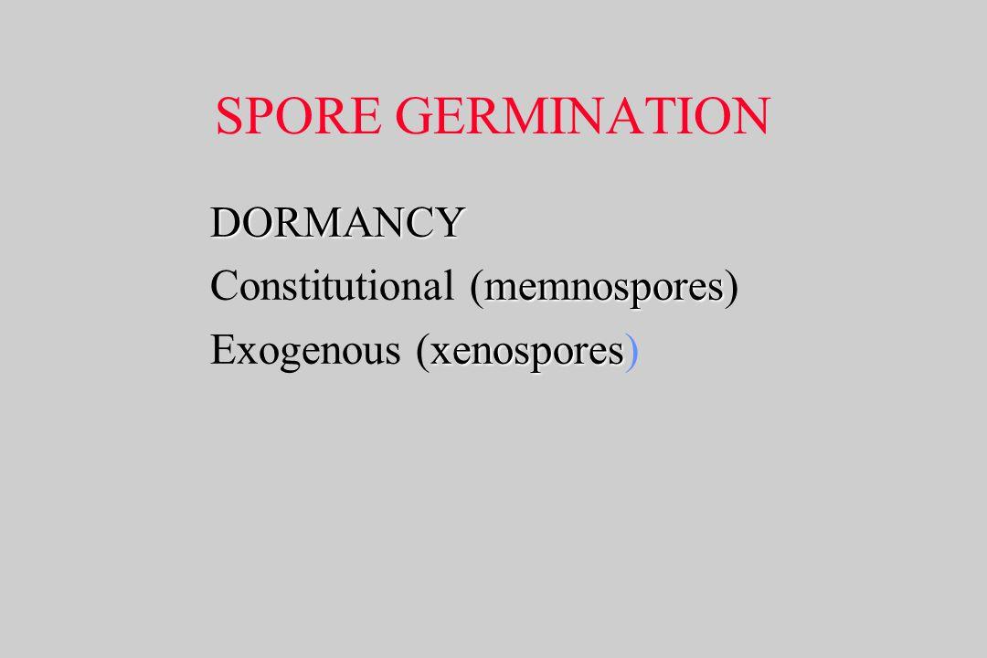 SPORE GERMINATION DORMANCY memnospores Constitutional (memnospores) xenospores Exogenous (xenospores)