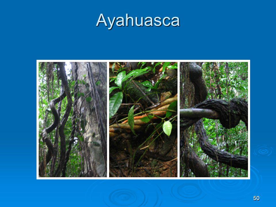 Ayahuasca 50
