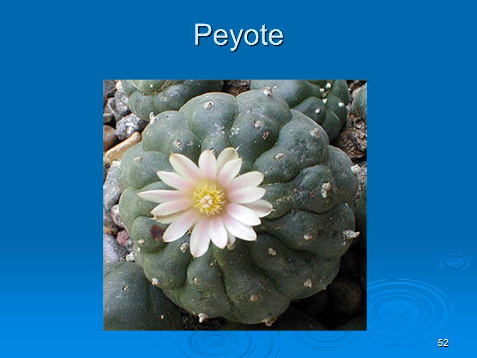 Peyote 52