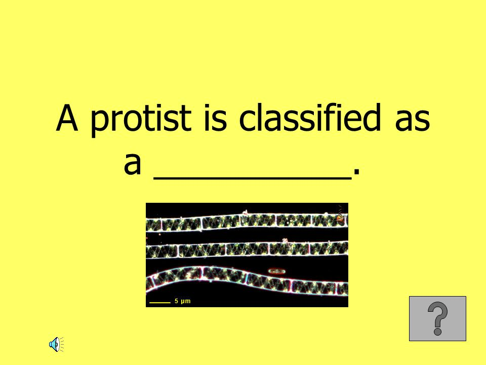 A protist is classified as a __________.