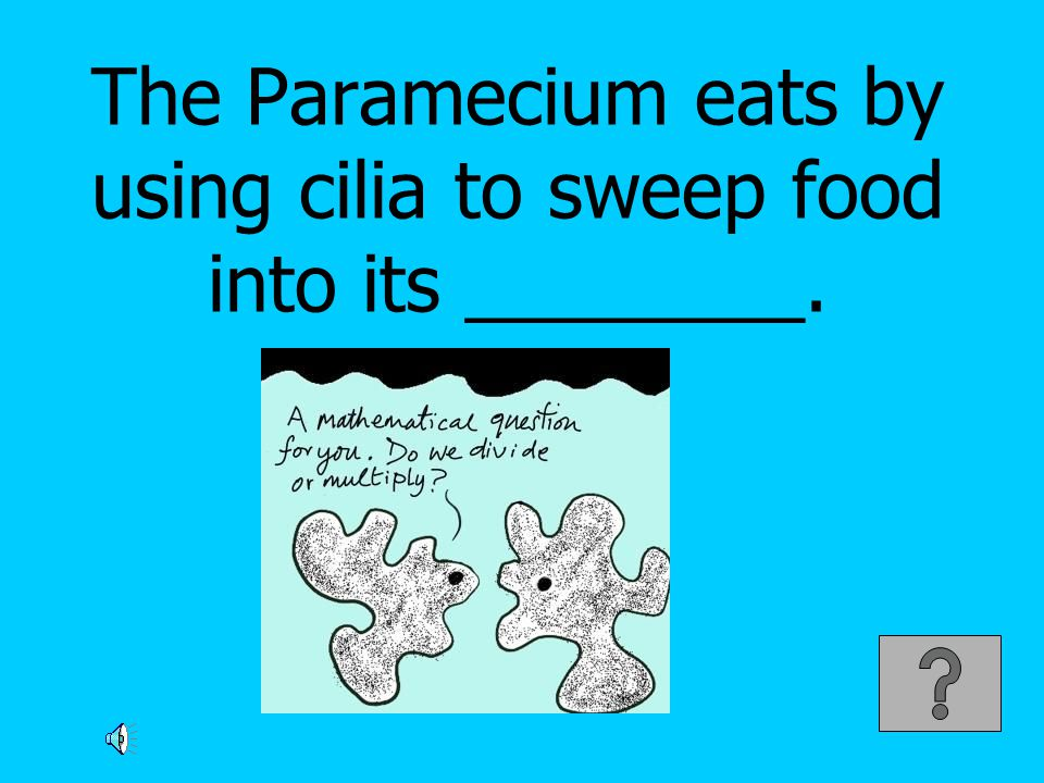 The Paramecium eats by using cilia to sweep food into its ________.