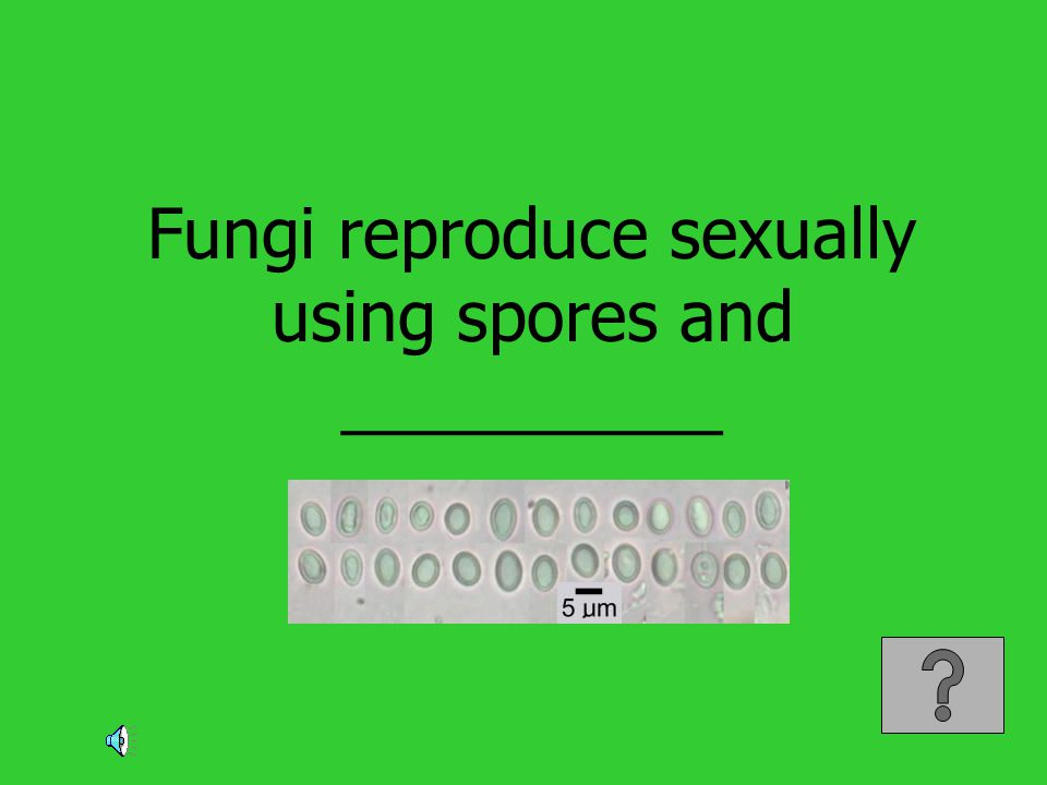 Fungi reproduce sexually using spores and __________