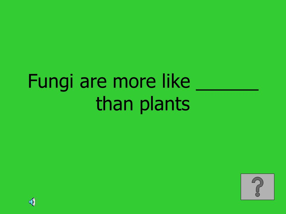 Fungi are more like ______ than plants