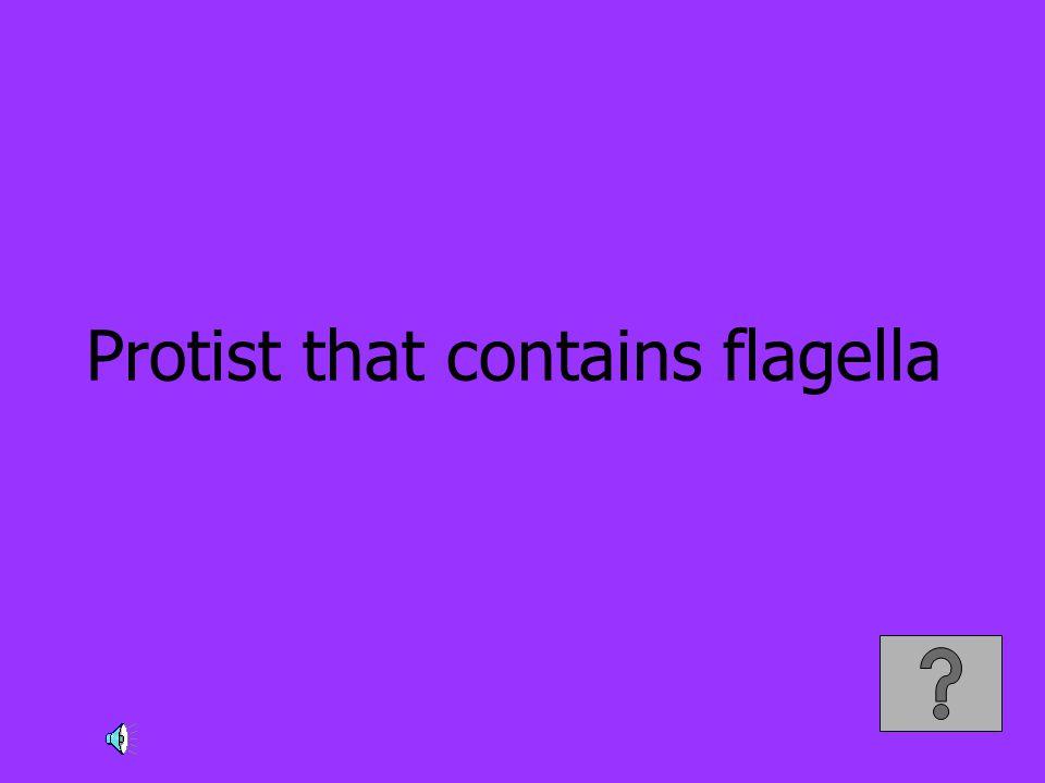 Protist that contains flagella