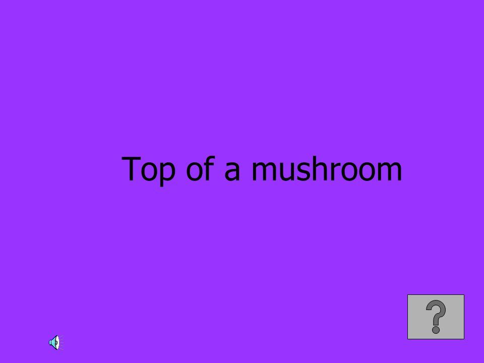 Top of a mushroom