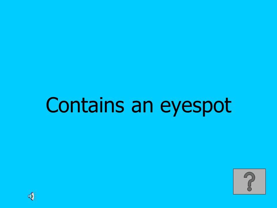Contains an eyespot