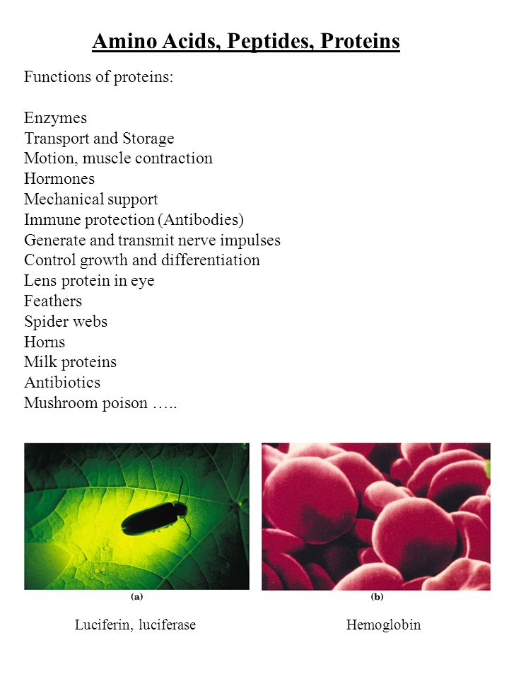 Amino Acids, Peptides, Proteins Functions of proteins: Enzymes Transport and Storage Motion, muscle contraction Hormones Mechanical support Immune protection (Antibodies) Generate and transmit nerve impulses Control growth and differentiation Lens protein in eye Feathers Spider webs Horns Milk proteins Antibiotics Mushroom poison …..