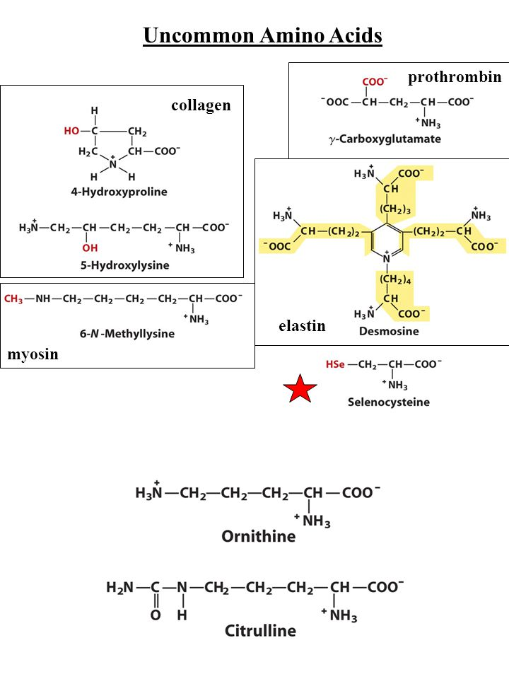 Uncommon Amino Acids collagen myosin prothrombin elastin