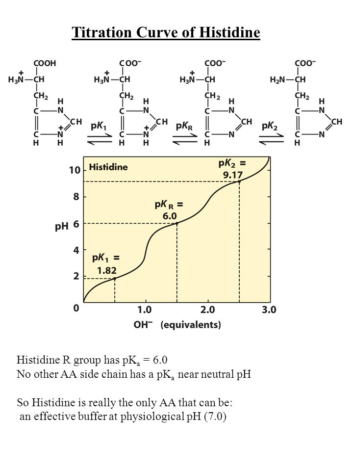 Titration Curve of Histidine Histidine R group has pK a = 6.0 No other AA side chain has a pK a near neutral pH So Histidine is really the only AA that can be: an effective buffer at physiological pH (7.0)