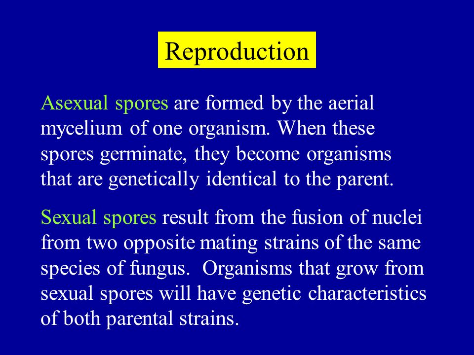 Reproduction Asexual spores are formed by the aerial mycelium of one organism. When these spores germinate, they become organisms that are genetically