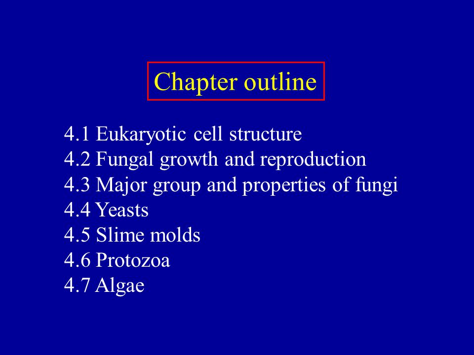 Chapter outline 4.1 Eukaryotic cell structure 4.2 Fungal growth and reproduction 4.3 Major group and properties of fungi 4.4 Yeasts 4.5 Slime molds 4.