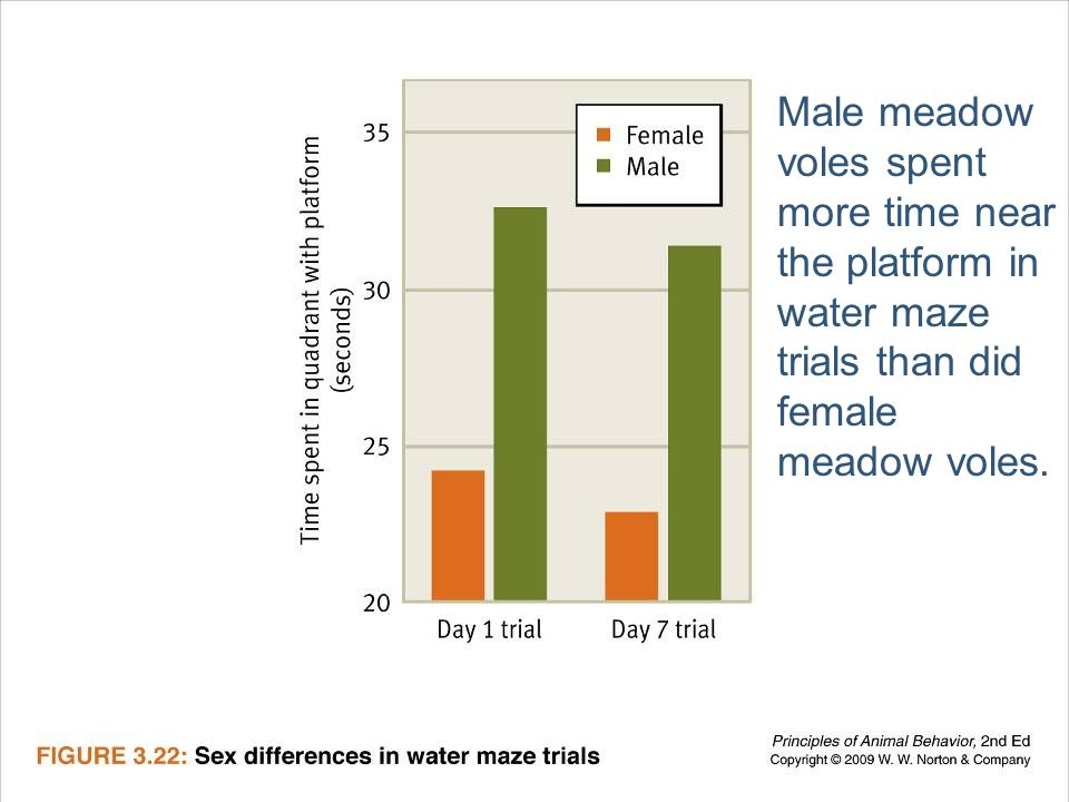 Male meadow voles spent more time near the platform in water maze trials than did female meadow voles.