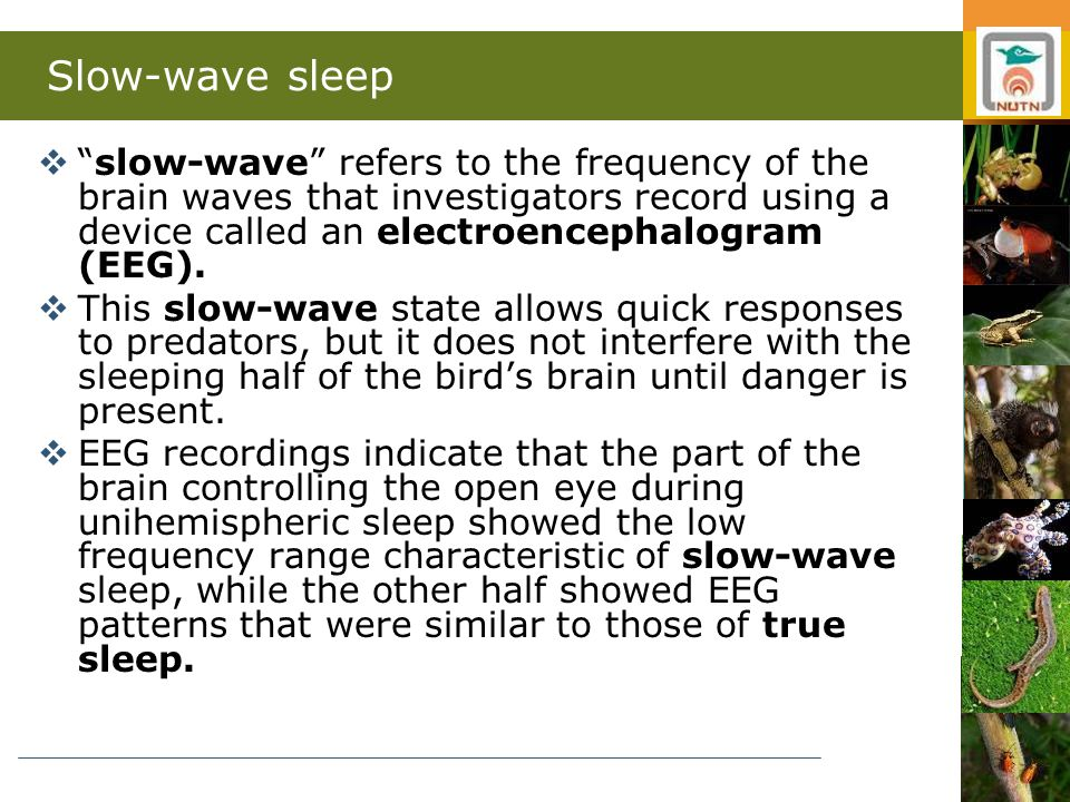 Slow-wave sleep  slow-wave refers to the frequency of the brain waves that investigators record using a device called an electroencephalogram (EEG).