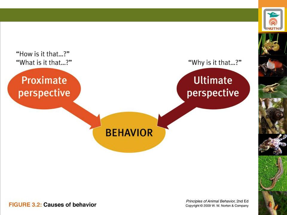 Neurobiological underpinnings of behavior
