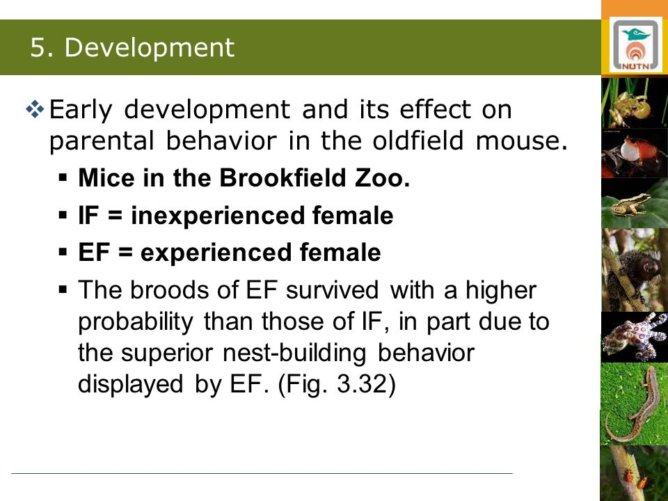 5. Development  Early development and its effect on parental behavior in the oldfield mouse.