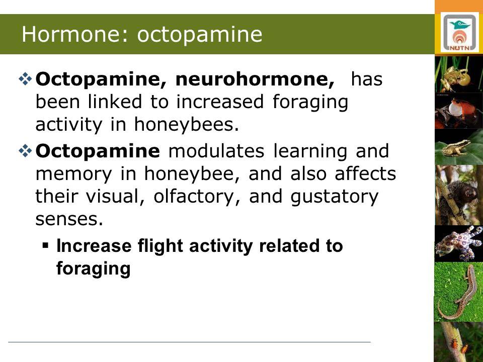 Hormone: octopamine  Octopamine, neurohormone, has been linked to increased foraging activity in honeybees.