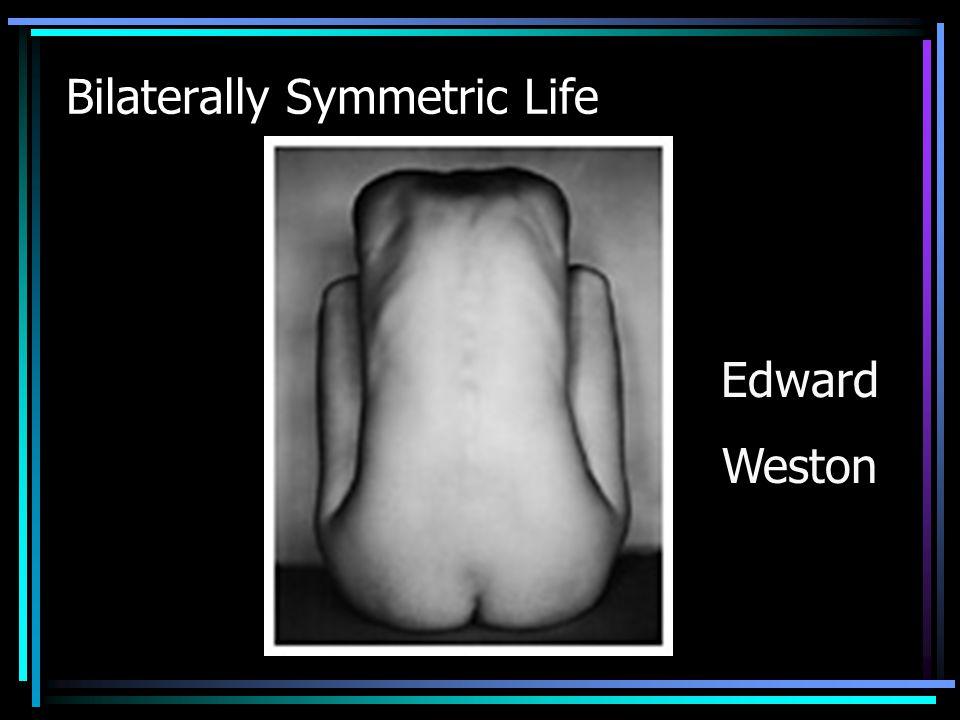 Bilaterally Symmetric Life Edward Weston