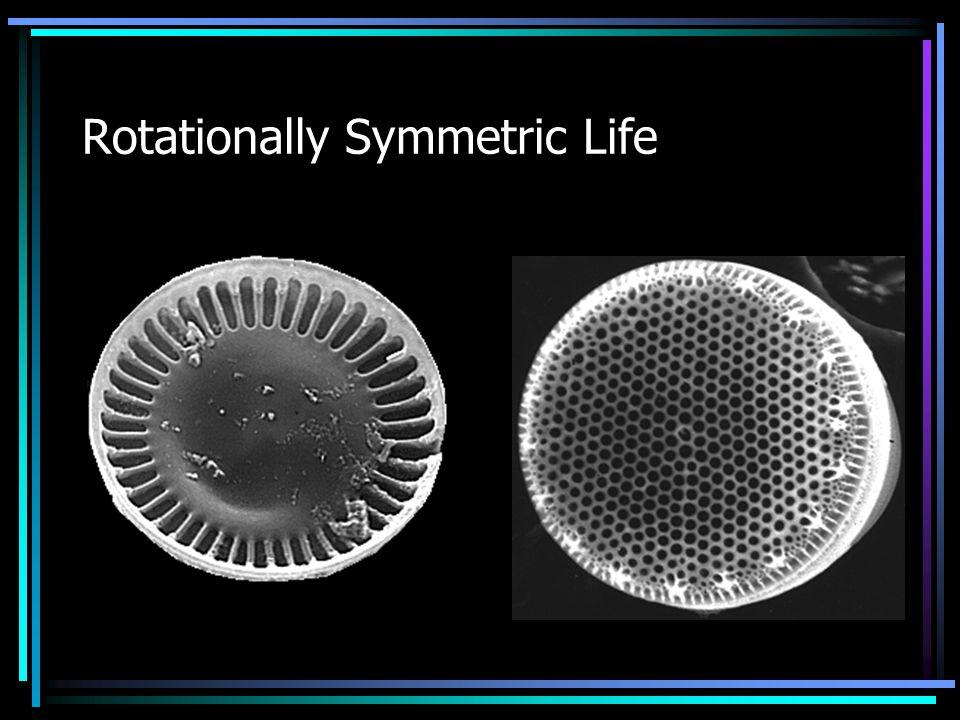 Rotationally Symmetric Life