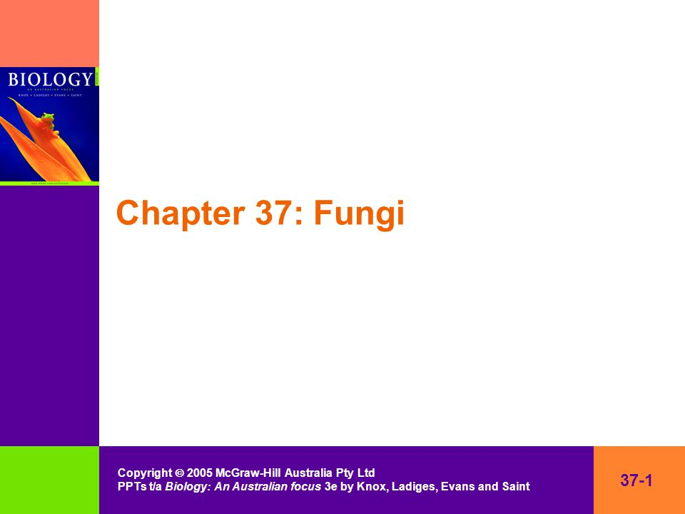 37-2 Copyright  2005 McGraw-Hill Australia Pty Ltd PPTs t/a Biology: An Australian focus 3e by Knox, Ladiges, Evans and Saint Kingdom Fungi Yeasts, truffles, mushrooms, rusts, moulds Characteristics –eukaryotic –heterotrophic –filamentous –chitin in cell walls