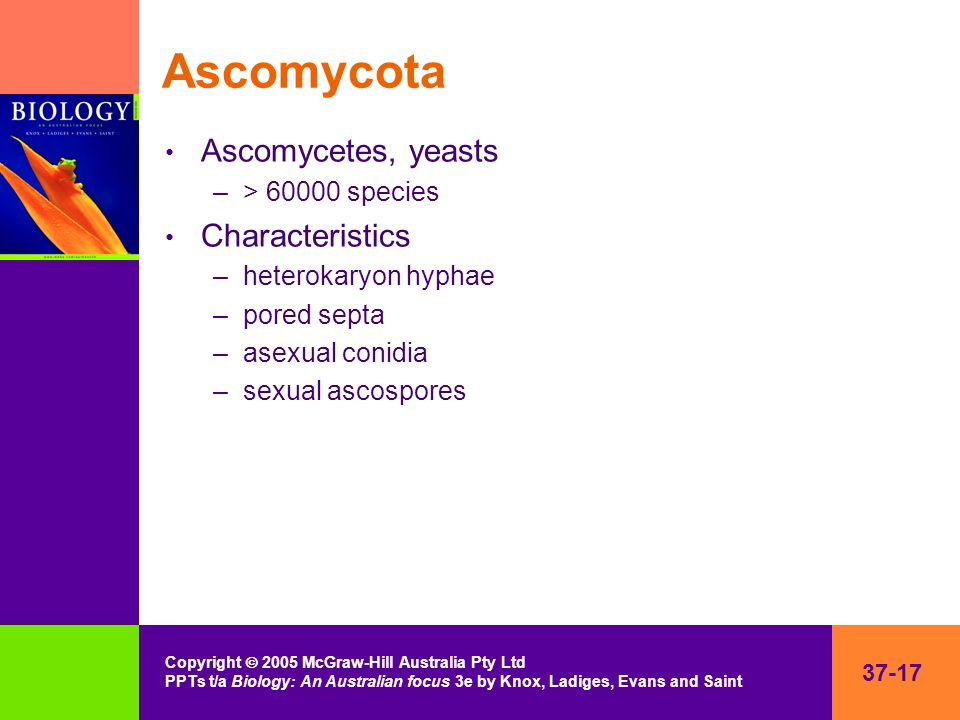 37-17 Copyright  2005 McGraw-Hill Australia Pty Ltd PPTs t/a Biology: An Australian focus 3e by Knox, Ladiges, Evans and Saint Ascomycota Ascomycetes, yeasts –> 60000 species Characteristics –heterokaryon hyphae –pored septa –asexual conidia –sexual ascospores
