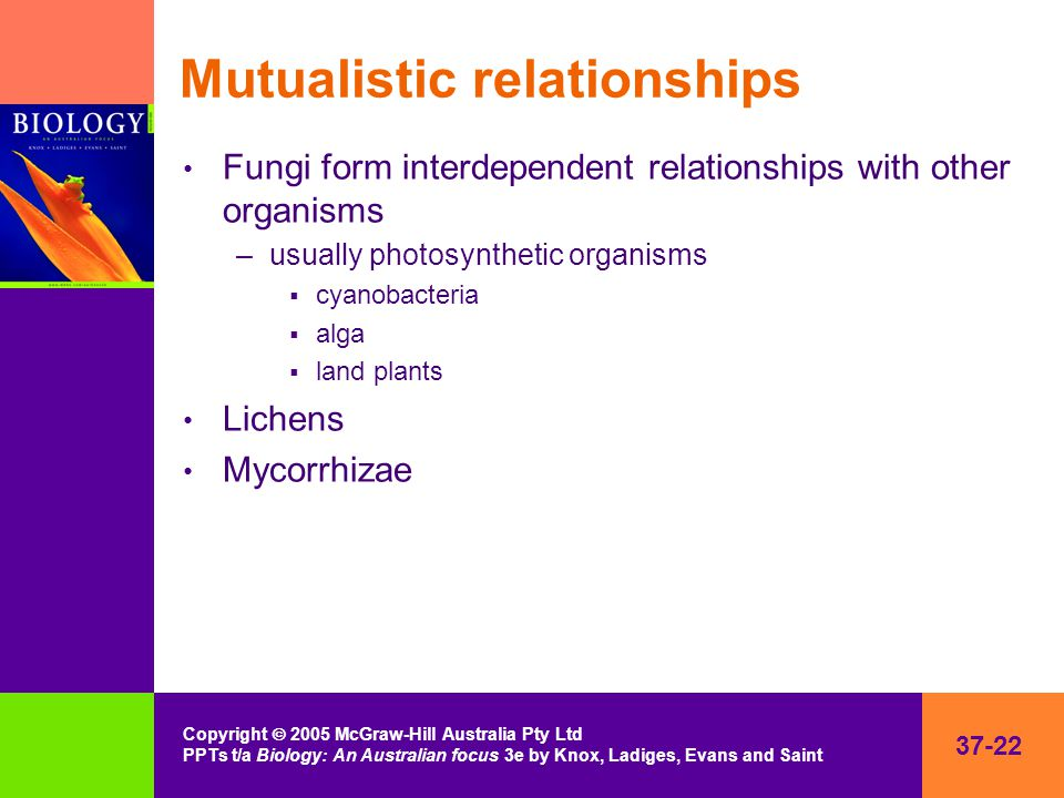 37-22 Copyright  2005 McGraw-Hill Australia Pty Ltd PPTs t/a Biology: An Australian focus 3e by Knox, Ladiges, Evans and Saint Mutualistic relationships Fungi form interdependent relationships with other organisms –usually photosynthetic organisms  cyanobacteria  alga  land plants Lichens Mycorrhizae