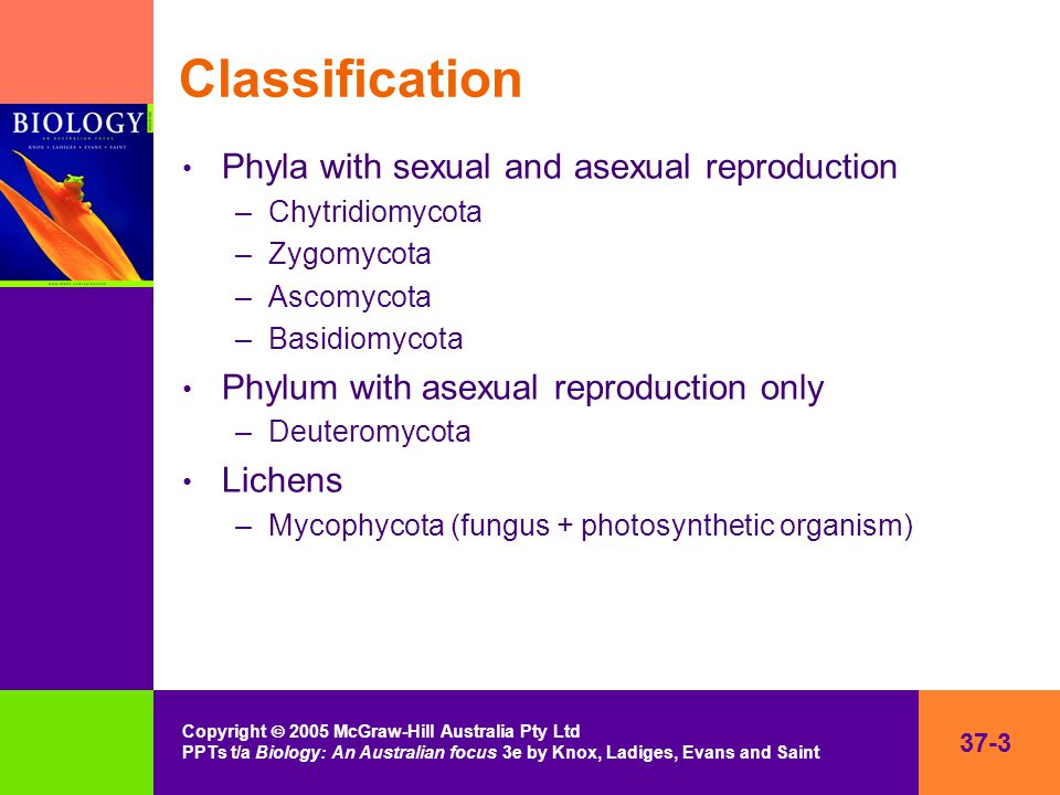 37-3 Copyright  2005 McGraw-Hill Australia Pty Ltd PPTs t/a Biology: An Australian focus 3e by Knox, Ladiges, Evans and Saint Classification Phyla with sexual and asexual reproduction –Chytridiomycota –Zygomycota –Ascomycota –Basidiomycota Phylum with asexual reproduction only –Deuteromycota Lichens –Mycophycota (fungus + photosynthetic organism)
