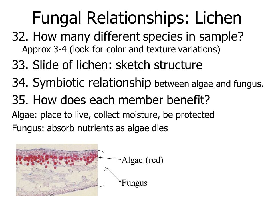 Fungal Relationships: Lichen 32. How many different species in sample.