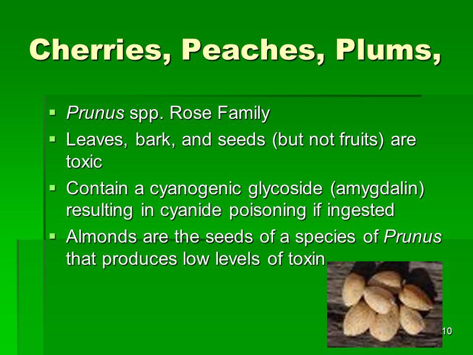 10 Cherries, Peaches, Plums,  Prunus spp.