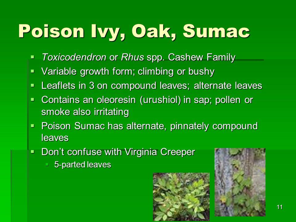 11 Poison Ivy, Oak, Sumac  Toxicodendron or Rhus spp.