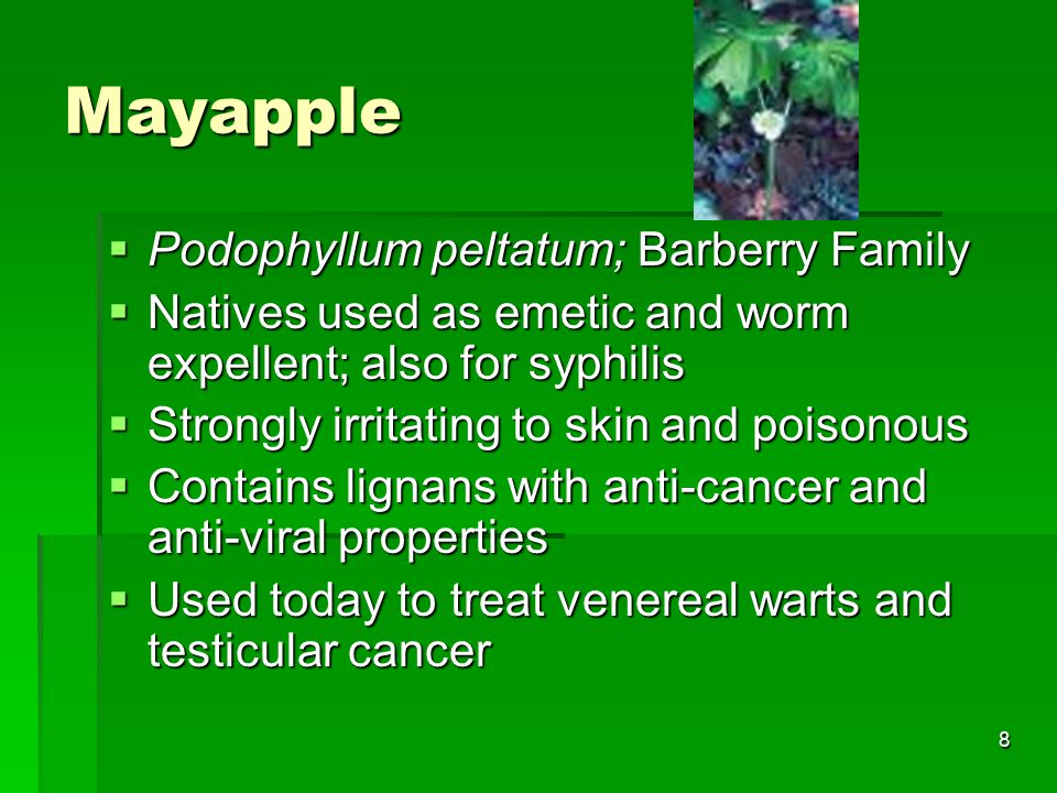 8 Mayapple  Podophyllum peltatum; Barberry Family  Natives used as emetic and worm expellent; also for syphilis  Strongly irritating to skin and poisonous  Contains lignans with anti-cancer and anti-viral properties  Used today to treat venereal warts and testicular cancer