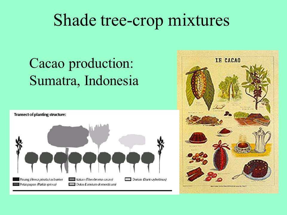 Cacao production: Sumatra, Indonesia Shade tree-crop mixtures