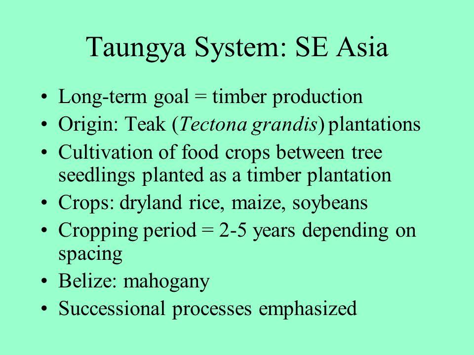 Taungya System: SE Asia Long-term goal = timber production Origin: Teak (Tectona grandis) plantations Cultivation of food crops between tree seedlings