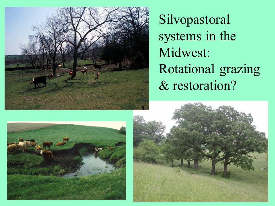 Silvopastoral systems in the Midwest: Rotational grazing & restoration?