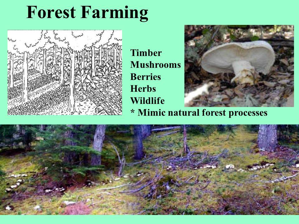 Forest Farming Matsutake Mushroom Timber Mushrooms Berries Herbs Wildlife * Mimic natural forest processes