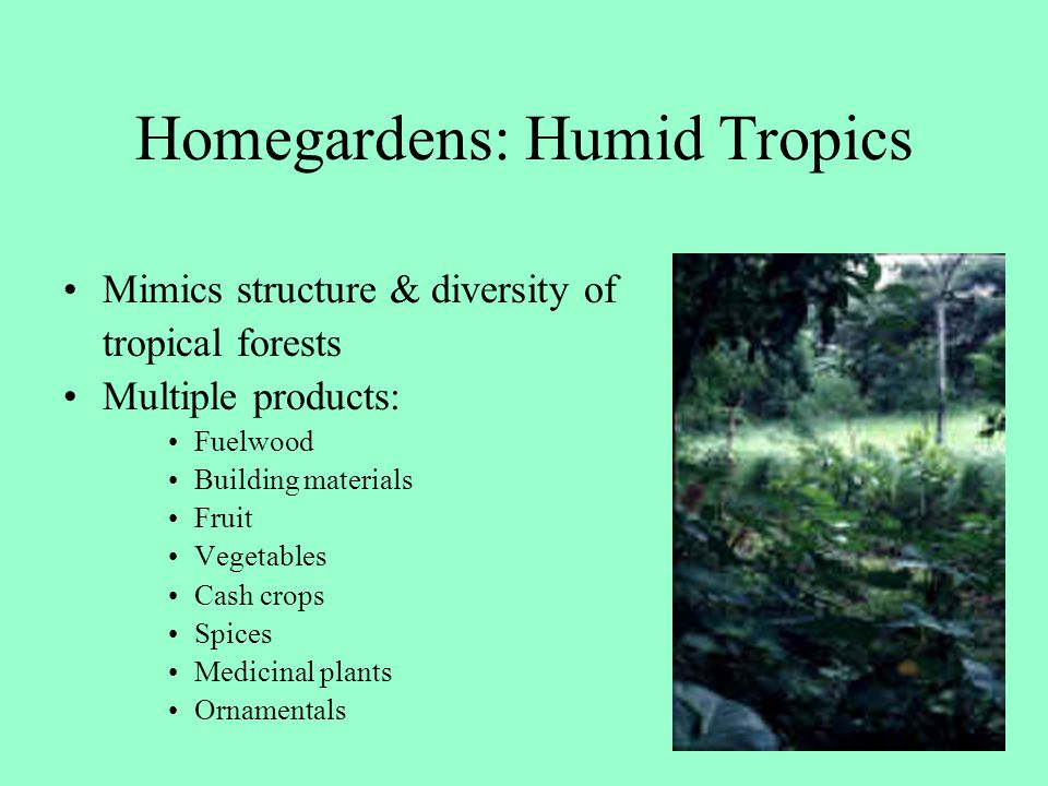 Homegardens: Humid Tropics Mimics structure & diversity of tropical forests Multiple products: Fuelwood Building materials Fruit Vegetables Cash crops