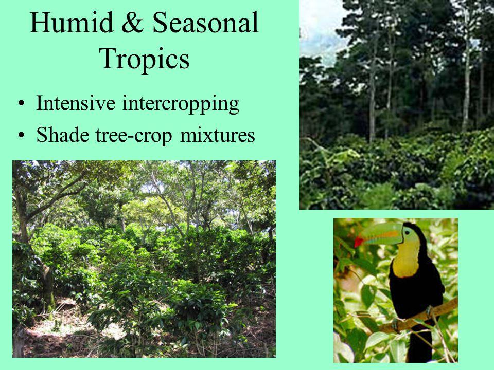 Intensive intercropping Shade tree-crop mixtures Humid & Seasonal Tropics