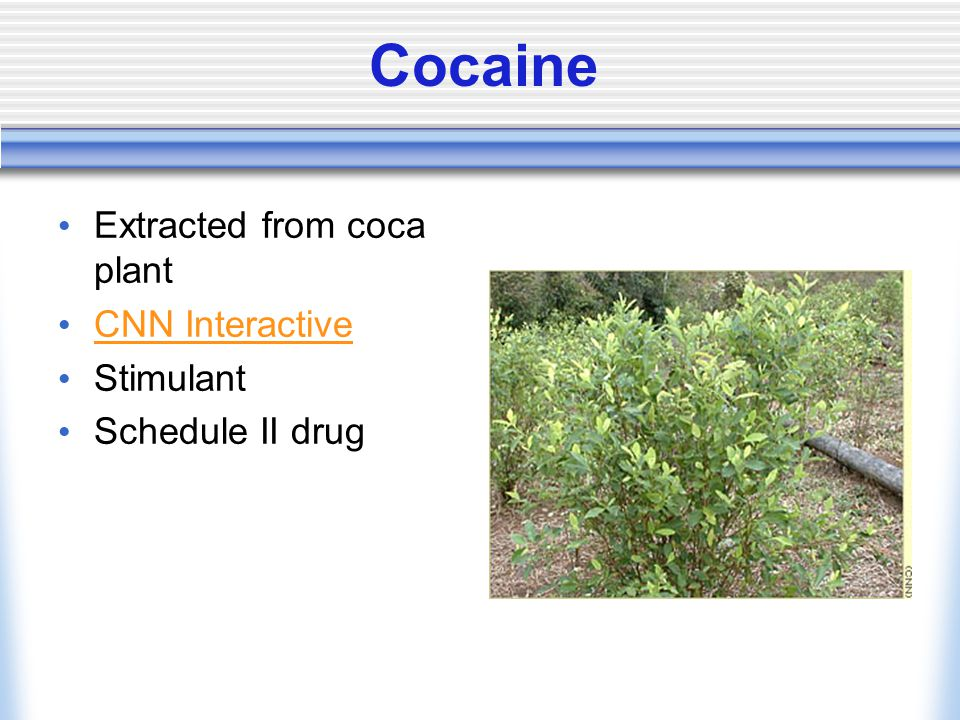 Cocaine Extracted from coca plant CNN Interactive Stimulant Schedule II drug
