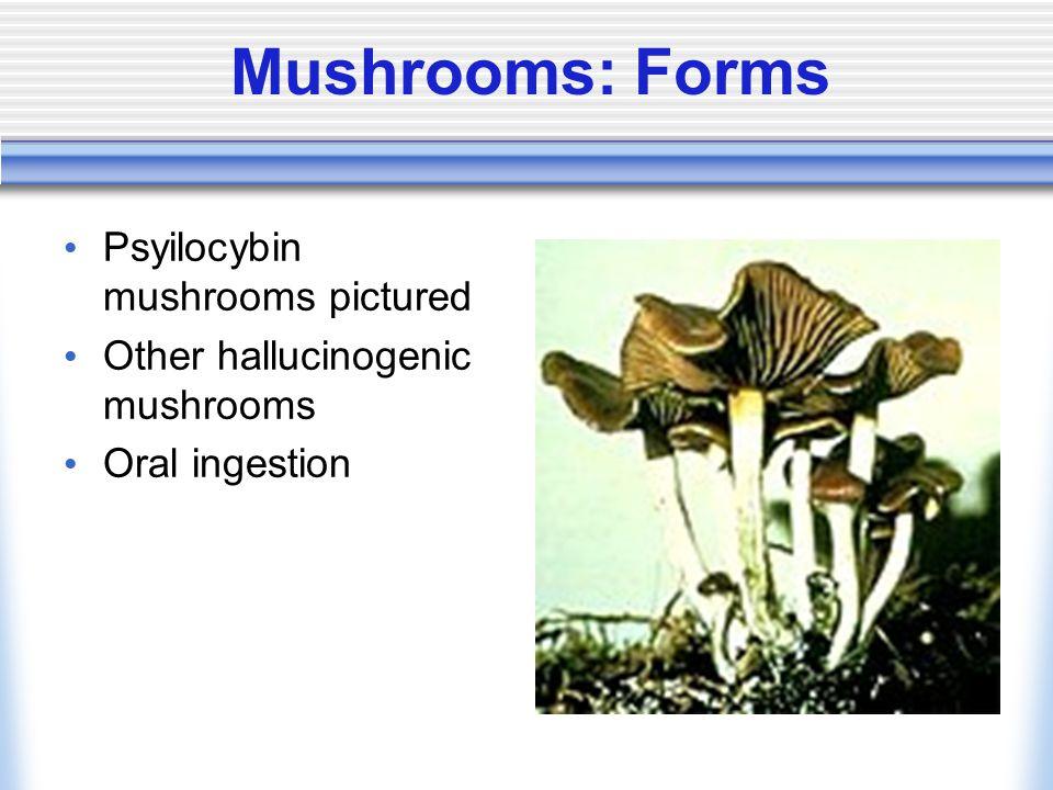 Mushrooms: Forms Psyilocybin mushrooms pictured Other hallucinogenic mushrooms Oral ingestion