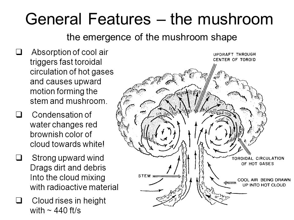 General Features – the mushroom the emergence of the mushroom shape  Absorption of cool air triggers fast toroidal circulation of hot gases and cause