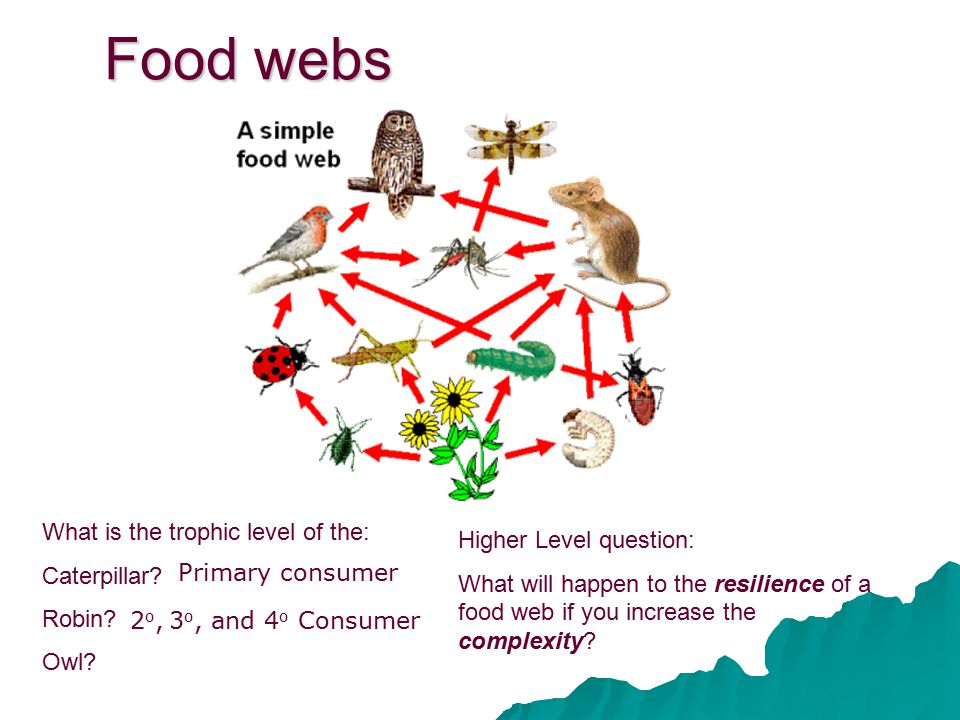 Food webs What is the trophic level of the: Caterpillar? Robin? Owl? Higher Level question: What will happen to the resilience of a food web if you in