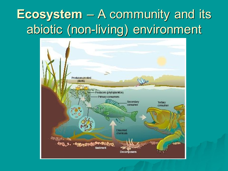 Ecosystem – A community and its abiotic (non-living) environment