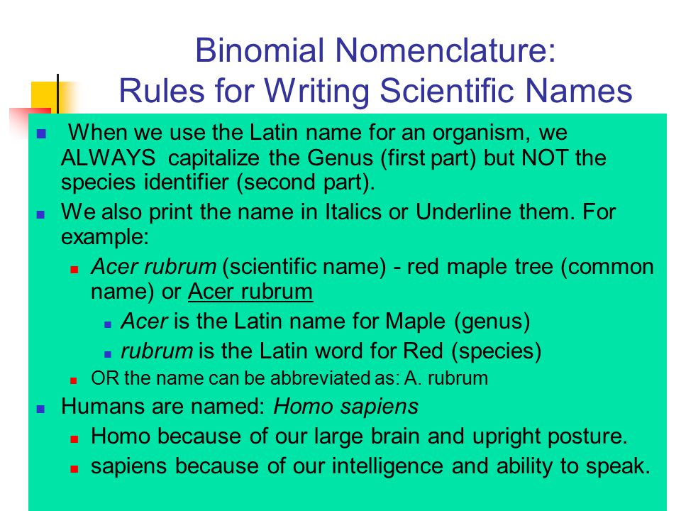 Binomial Nomenclature: Rules for Writing Scientific Names When we use the Latin name for an organism, we ALWAYS capitalize the Genus (first part) but