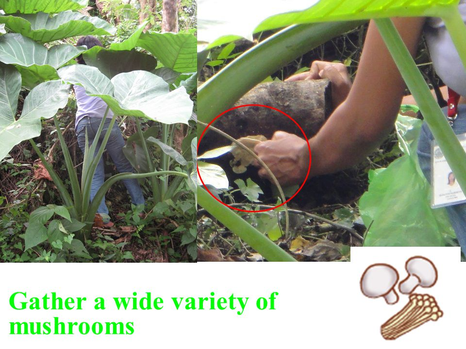 Gather a wide variety of mushrooms
