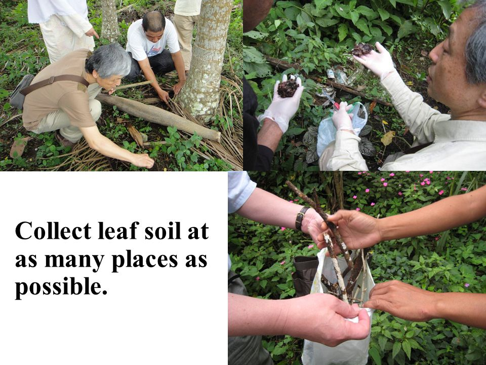 Collect leaf soil at as many places as possible.