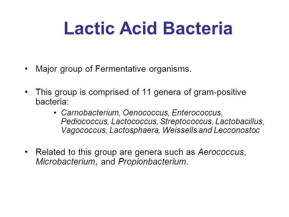 Lactic Acid Bacteria Major group of Fermentative organisms. This group is comprised of 11 genera of gram-positive bacteria: Carnobacterium, Oenococcus