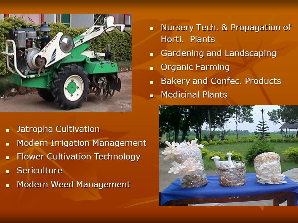 Certificate Programmes (5) – (English) Landscaping and Ornamental Gardening Commercial Horticulture Integrated Nutrient Management Soil Fertility Management Mushroom cultivation