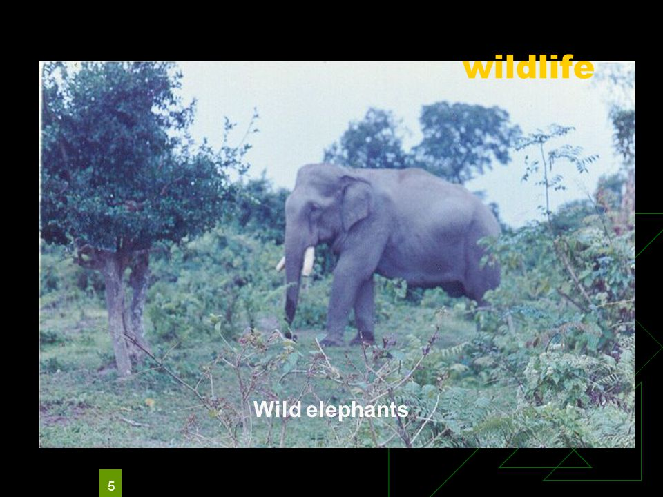 5 Wild elephants wildlife