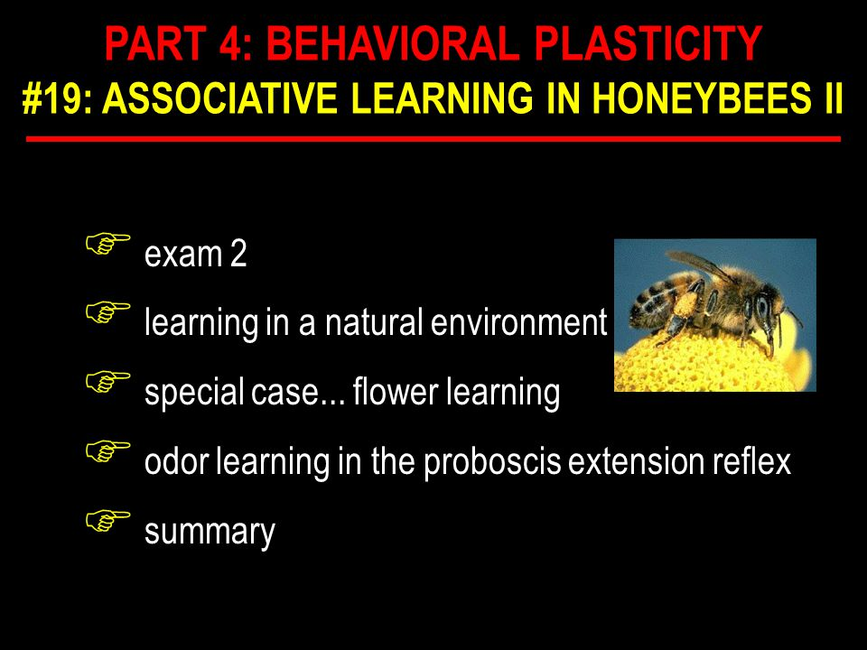 F exam 2 F learning in a natural environment F special case... flower learning F odor learning in the proboscis extension reflex F summary PART 4: BEH