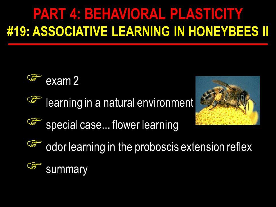 F honeybee brain F ~ 10 6 neurons F complex F what neuropiles mediate PER? ANATOMY OF PER